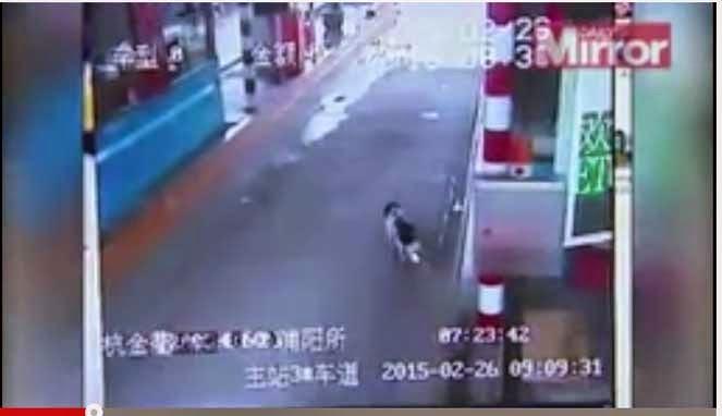Anjing yang mencari majikannya