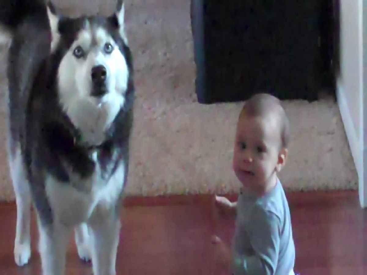 Video lucu bayi