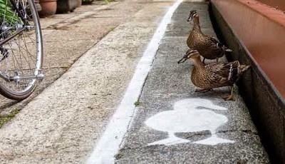 Jalan khusus bebek di Inggris