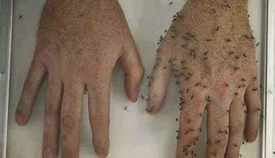 Obat anti nyamuk alami