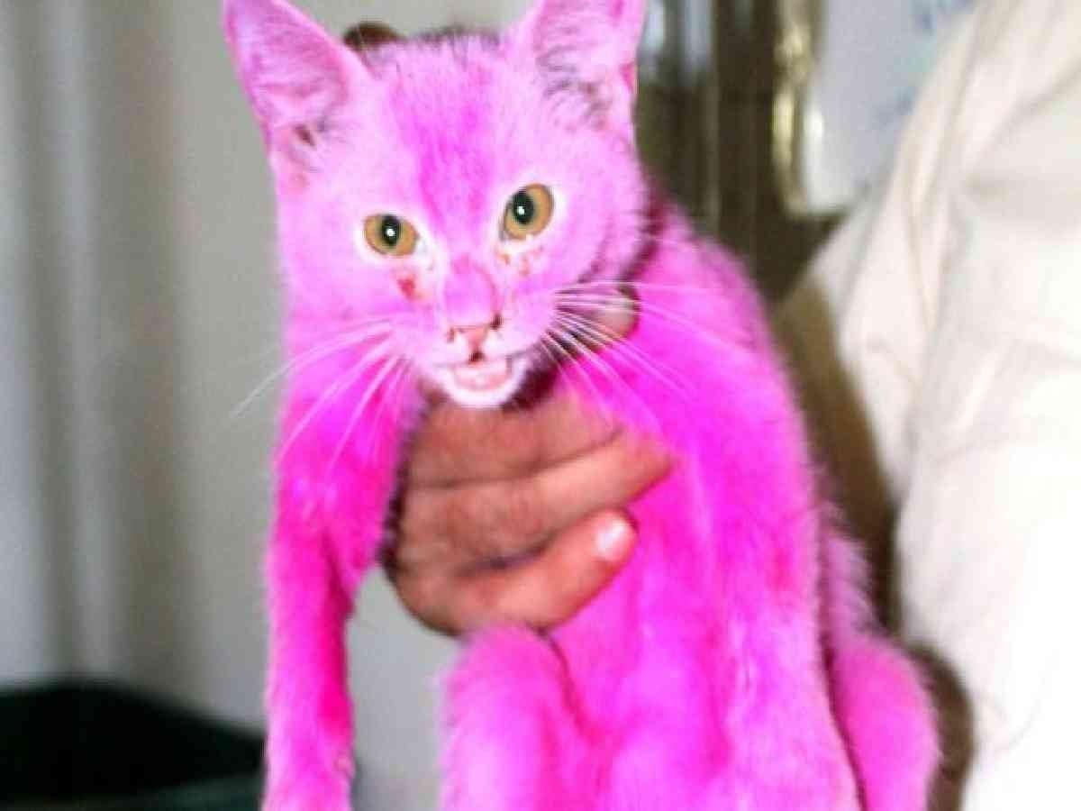 Kucing warna pink