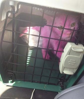 Pinky ditemukan terkurung dalam kerangkeng besi