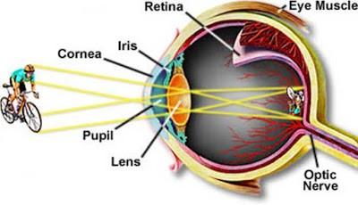 Nama - nama bagian mata manusia