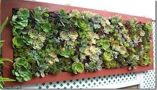 Kebun dinding