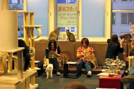 Kafe Kucing di Jepang
