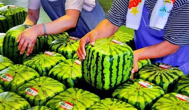 Jepang adalah pemilik buah semangka termahal di dunia.