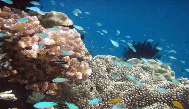 Keindahan bawah laut Pulau Raja Ampat