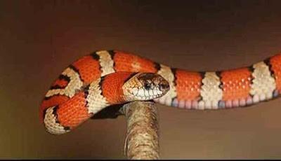 Mimpi bertemu ular merah