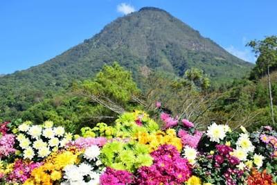 Kebun Bunga Batu Flower Garden Malang