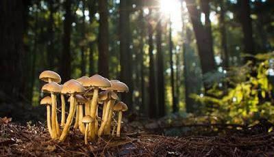 Fakta tentang jamur