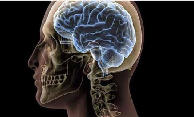 Gambar otak manusia