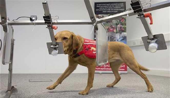 Anjing bisa deteksi kanker