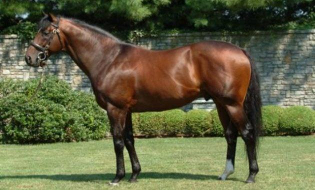 Kuda Fusaichi Pegasus paling mahal di dunia