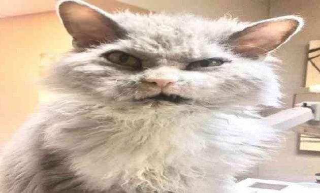Kucing berwajah garang