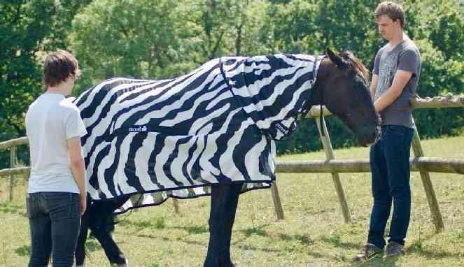 Kenapa Zebra Kulitnya Belang?
