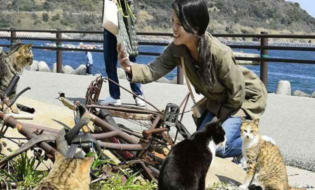 Pengunjung berfoto bersama kucing