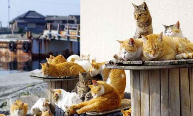 Segerombolan kucing sedang bersantai