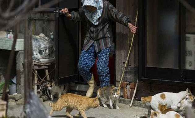 Seorang warga bersama kucing-kucingnya