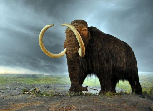 Hewan punah Woolly Mammoth